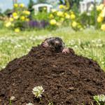 Jak odstraszyć i pozbyć się szkodników z ogrodu? Najlepsze sposoby