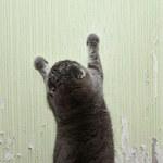 Jak oduczyć kota niszczenia?