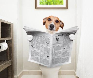 Jak oduczyć psa sikania w domu?
