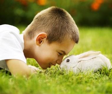 Jak oswoić królika?