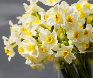 Jak pielęgnować i przedłużyć życie ciętym kwiatom?