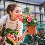 Jak pielęgnować kwiaty zimą?