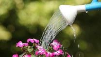 Jak pielęgnować kwiaty?