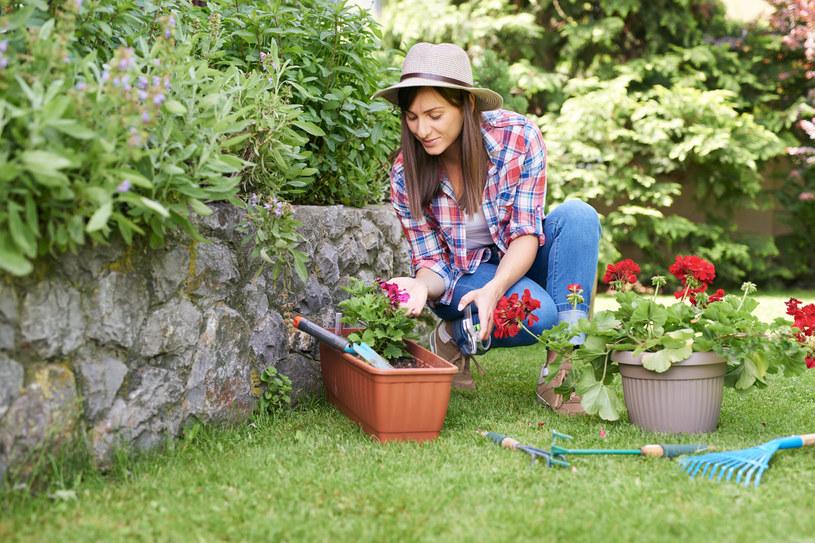Jak pielęgnować ogród latem? /123RF/PICSEL