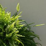 Jak pielęgnować rośliny doniczkowe jesienią?