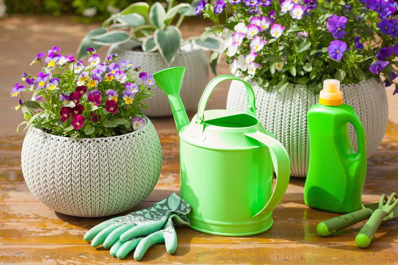 Jak pielęgnować rośliny doniczkowe? /©123RF/PICSEL