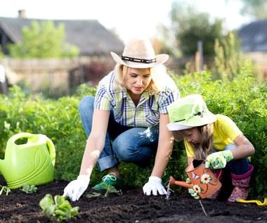 Jak pielęgnować rośliny w ogrodzie?