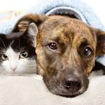 Jak pielęgnować sierść zwierząt