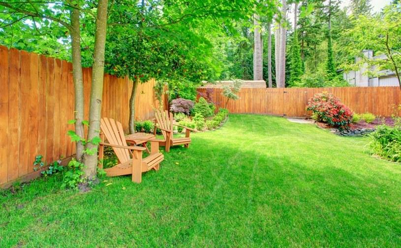 Jak pielęgnować trawnik? /123RF/PICSEL