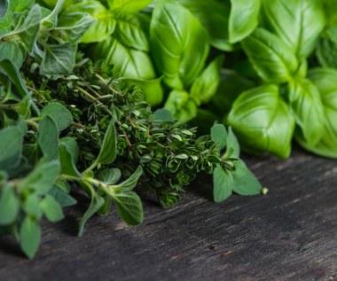 Jak pielęgnować zioła doniczkowe kupione w sklepie?