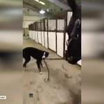 Jak pies z... koniem, czyli niestandardowy spacer zwierzaków