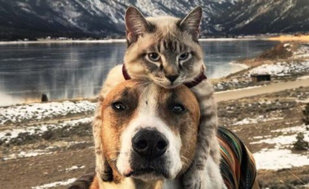 Jak pies z kotem? Henry i Baloo to niezwykły duet czworonożnych podróżników