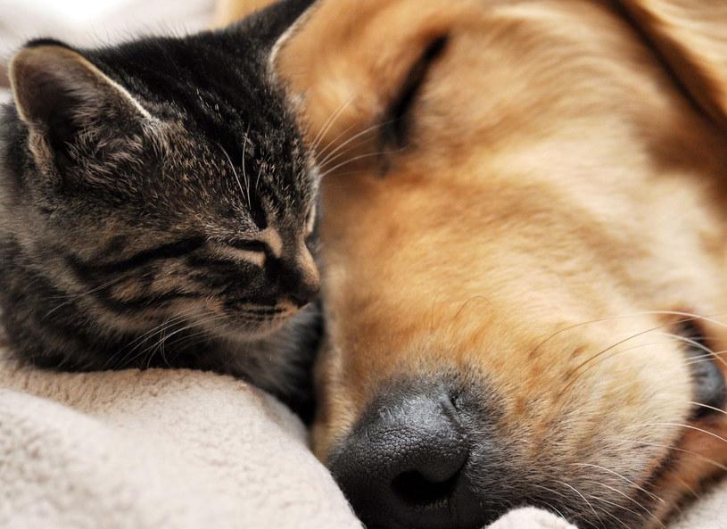 Jak pies z kotem? /123RF/PICSEL