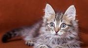 Jak pomóc kotu?