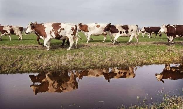Jak poprawić pozycję producentów mleka? /AFP