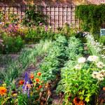 Jak poprawić właściwości gleby w ogrodzie?