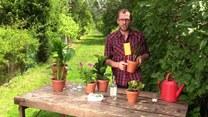 Jak poradzić sobie ze szkodnikami w ogrodzie?