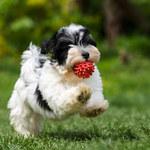 Jak postępować w przypadku zadławienia u psa lub kota?