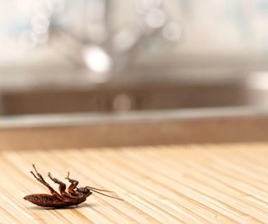 Jak pozbyć się insektów? Domowe metody