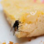 Jak pozbyć się much z domu i ogródka? Sprawdzone sposoby