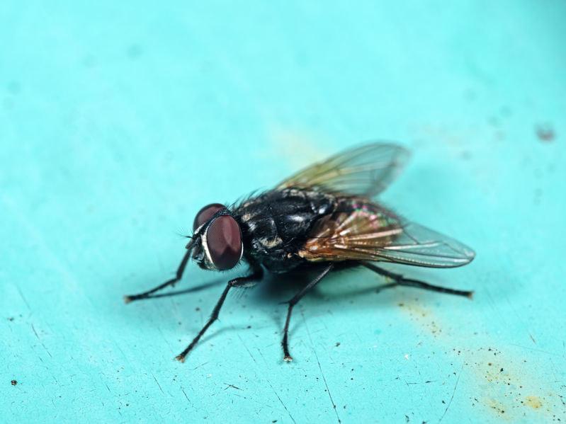 Jak pozbyć się much z domu? /©123RF/PICSEL