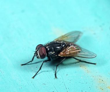 Jak pozbyć się much z domu?