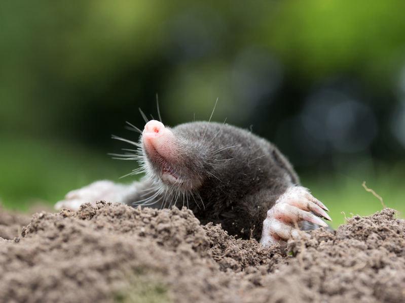 Jak pozbyć się niechcianych gości z ogrodu? /©123RF/PICSEL