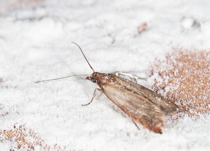 Jak pozbyć się owadów z domu? /©123RF/PICSEL