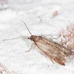 Jak pozbyć się owadów z domu?