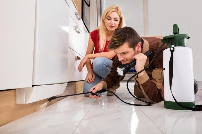 Jak pozbyć się owadów z kuchni? /123RF/PICSEL