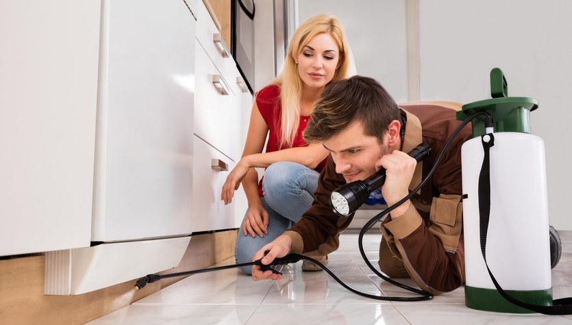Jak pozbyć się owadów z kuchni?