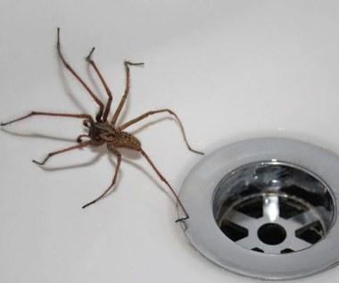 Jak pozbyć się pająków z domu?
