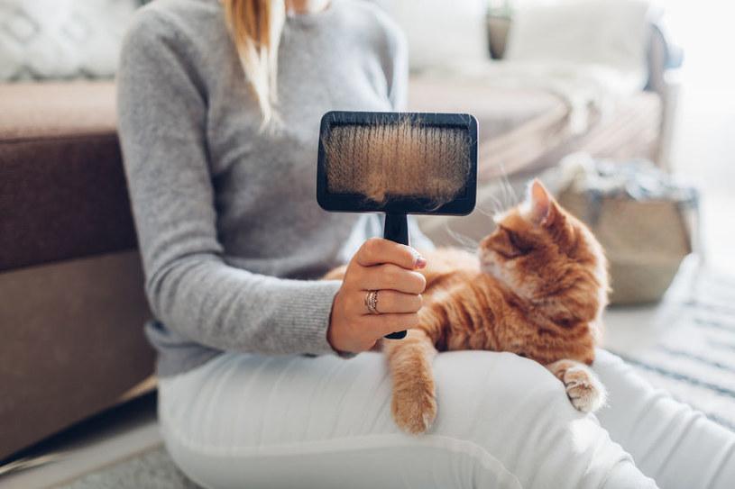 Jak pozbyć się sierści z dywanu? /©123RF/PICSEL