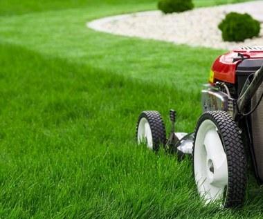 Jak prawidłowo wykonać dosiewanie trawnika?