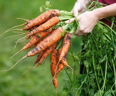 Jak przechować marchew na zimę?