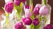 Jak przedłużysz życie tulipanów w wazonie