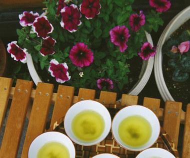 Jak przeprowadzić detoks organizmu z pomocą herbaty?