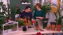 Jak przesadzać rośliny domowe?