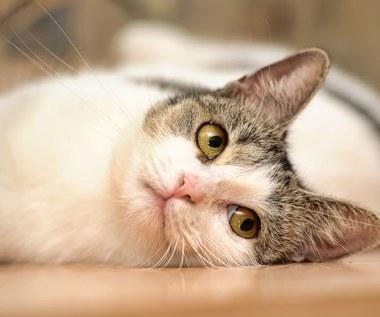 Jak przyciąć pazury kota?