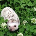 Jak przyciągnąć do ogrodu pożyteczne zwierzęta?