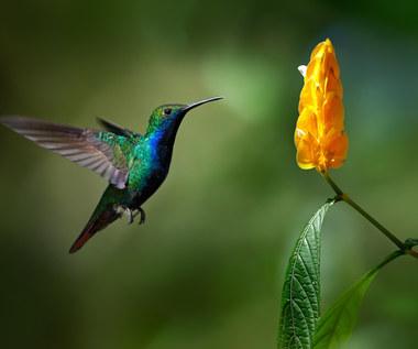 Jak przyciągnąć ptaki do ogrodu?
