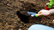 Jak przygotować glebę pod wiosenne nasadzenia