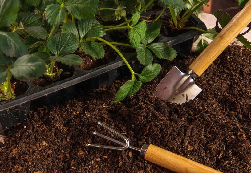 Jak przygotować ogród na wiosnę? /123RF/PICSEL