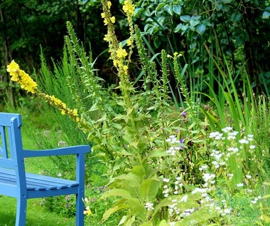 Jak przygotować ogród przed wyjazdem wakacyjnym?