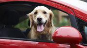 Jak przygotować psa do podróży?