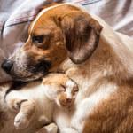 Jak przyzwyczaić kota do obecności psa w domu?
