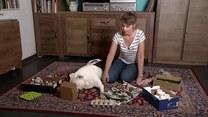 Jak rozładować skumulowaną psią energię?