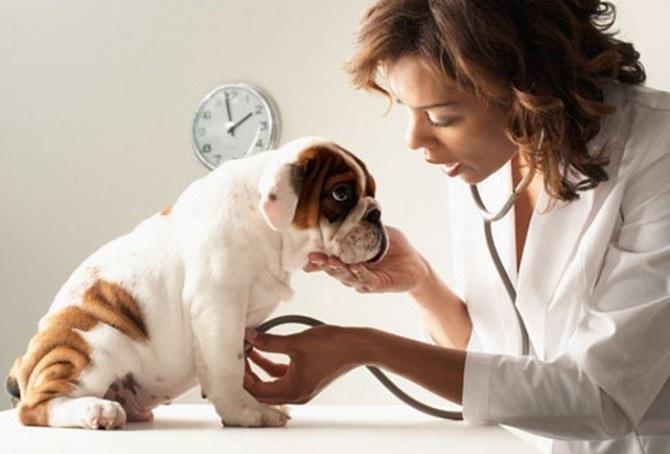 Jak rozpoznać nowotwór u psa /© Photogenica