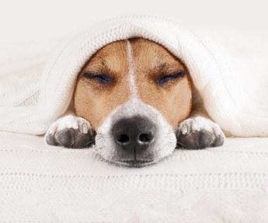 Jak rozpoznać pasożyty u psa i kota?