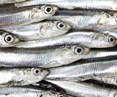 Jak rozpoznać świeżość ryb?